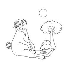 Meerkat-16