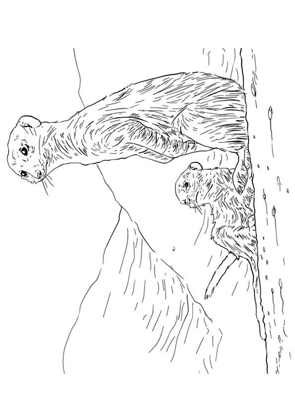 Meerkat-Mama-With-Baby