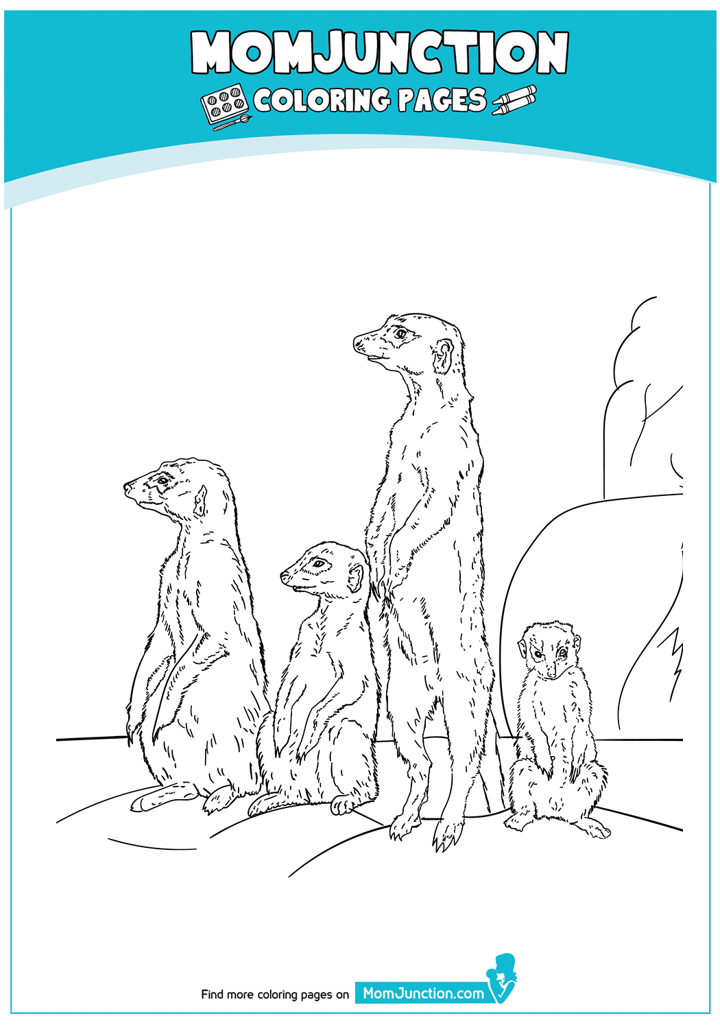 Meerkat-With-A-Group-17