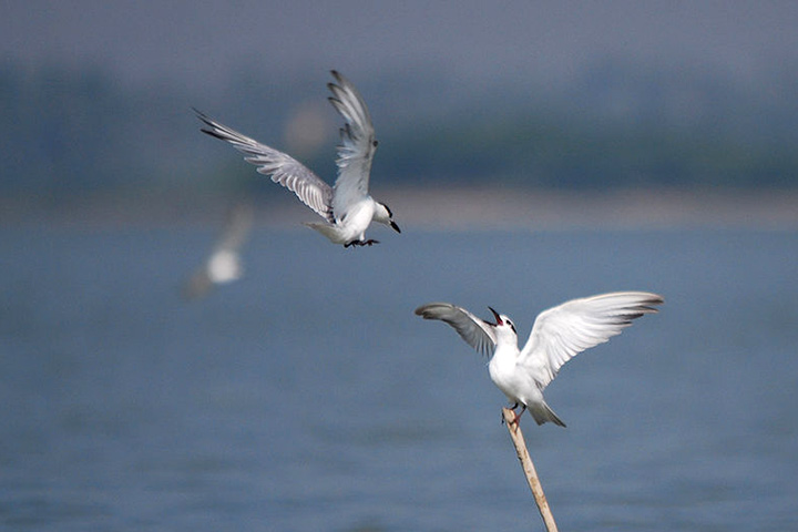 Odiyur Lake In Chennai With Pictures