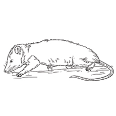 Possum Resting Printable Coloring Page