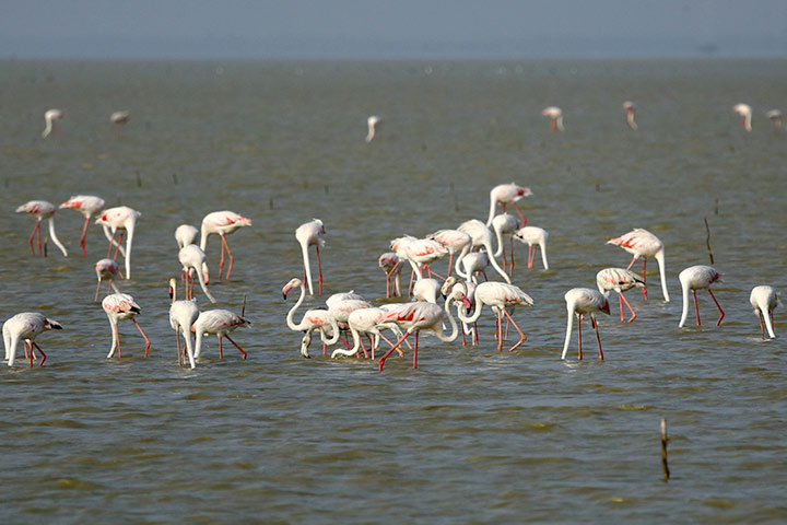 Pulicat Lake & Bird Sanctuary In Chennai With Pictures