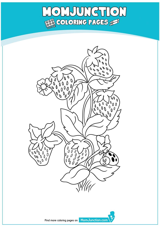 Strawberry-Plant-17