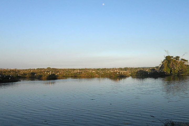 Vedanthangal Bird Sanctuary In Chennai With Pictures