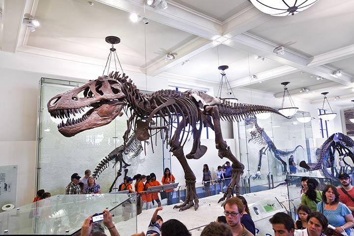 Dinosaur Activities For Preschoolers - Dinosaur Museum