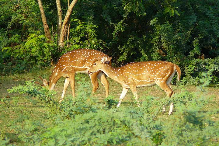 Parks In Chennai - Guindy National And Snake Park