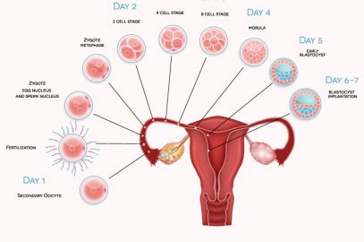 When Does Implantation Occur And What Are Its Signs And Symptoms?