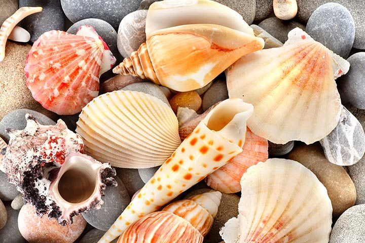 Nature Crafts For Kids - Sea Shell Creatures
