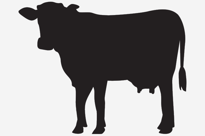 Cow Crafts - Cow Silhouette