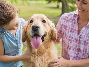 71 Interesting Facts About Dogs To Share With Kids