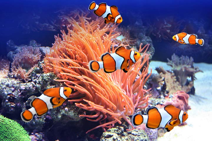 Child adoption pictures posters news and videos on for Clown fish habitat
