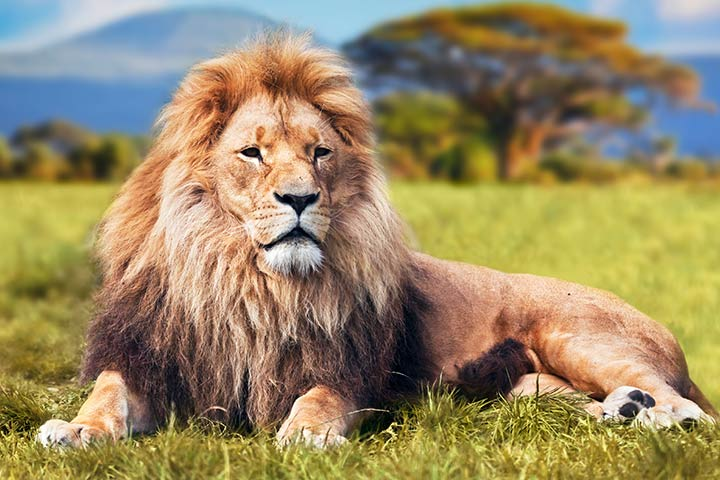 Fascinating Facts About Lions For Kids