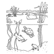 Nature Coloring Pages Freshwater Habitat