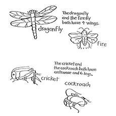 nature coloring pages insects