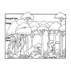 Delicate image with layers of the rainforest printable