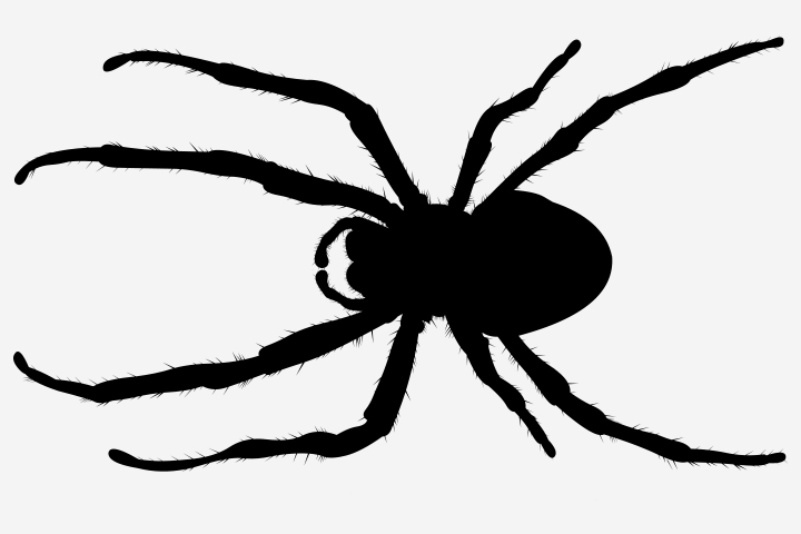 Spider Craft - Spider Silhouette Craft