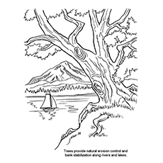 Nature Coloring Pages - Trees