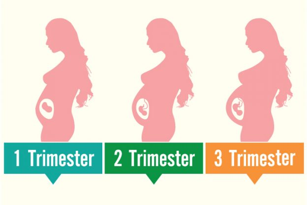 Uterus During Pregnancy Its Size, Changes And Role-1023