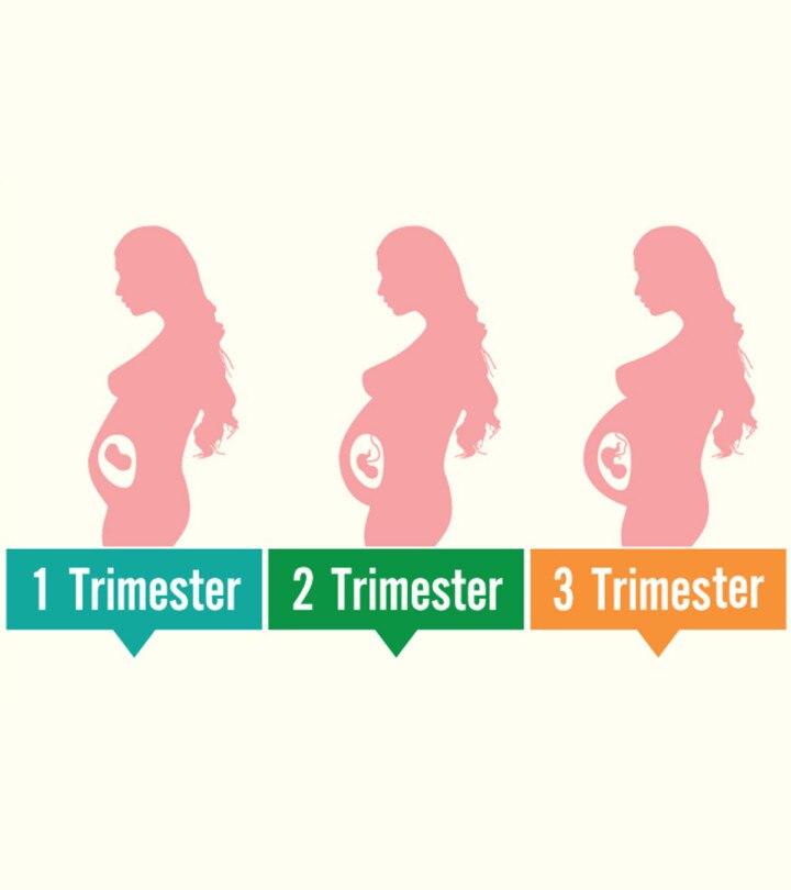 Uterus Size During Pregnancy