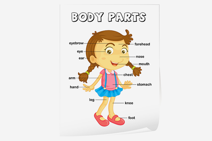 English Worksheets For Kids - Vocabulary (Parts-Of-The-Body) Worksheet