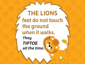 Fun Facts And Information About Lions For Kids