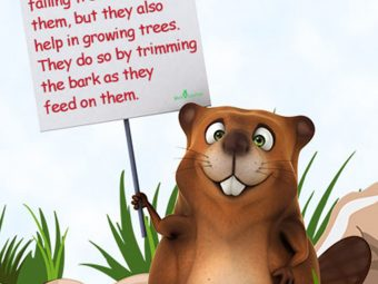 21 Unbelievable Beaver Facts And Information For Kids
