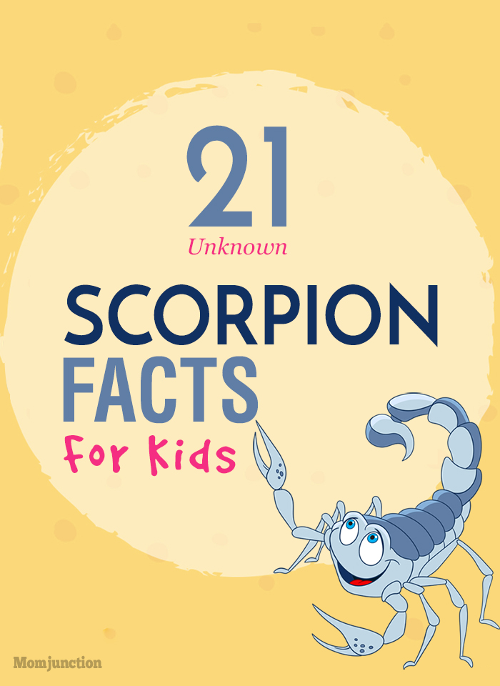 21 Unknown Scorpion Facts And Information For Kids