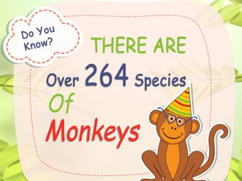 25 Fun Facts And Information About Monkey For Kids
