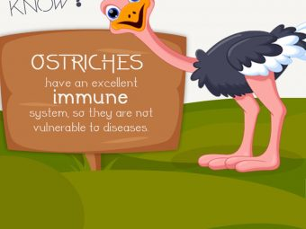 30 Incredible Information And Facts About Ostrich For Kids