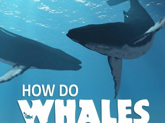 Interesting Facts And Information About Whales For Kids