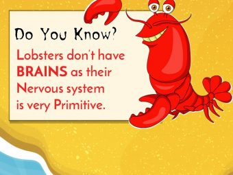 Interesting Lobster Facts And Information For Kids