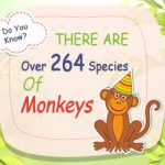 Monkey Facts For Kids - f
