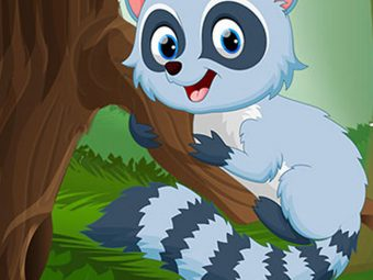 20 Raccoon Facts And Information For Kids To Know