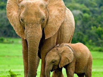 25 Amazing Facts And Information About Elephants For Kids