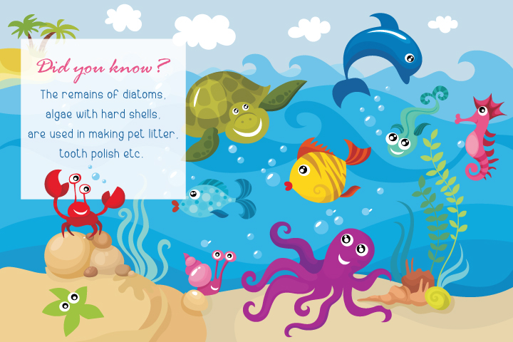 sea animals information for kids