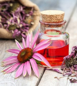 Echinacea When Breastfeeding Safety, Benefits, And Side Effects Banner