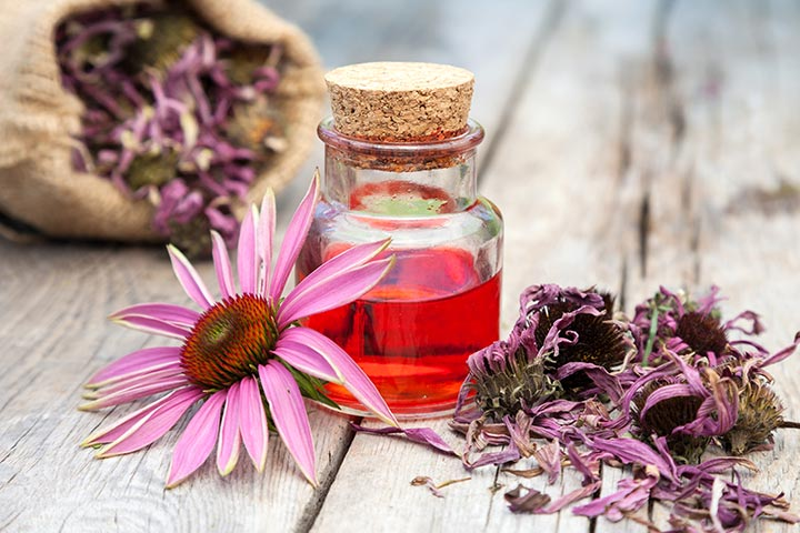 Echinacea When Breastfeeding Safety, Benefits, And Side Effects web