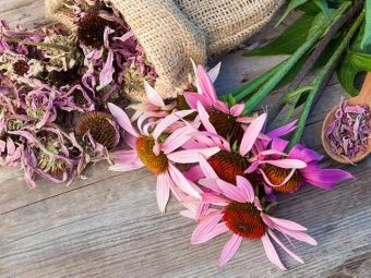 Is Echinacea Safe For Your Baby?