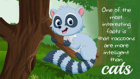 Raccoon-Facts-And-Information
