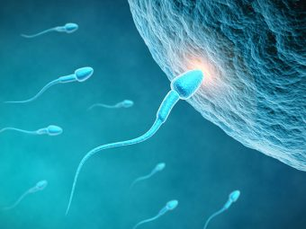Unbelievable: You Can Get Pregnant Without Eggs Or Sperm