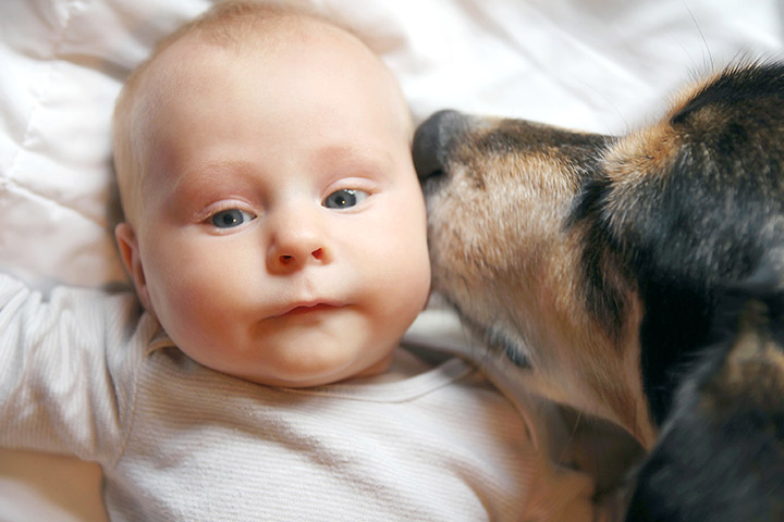 Why Dogs and Cats Make Babies Healthier