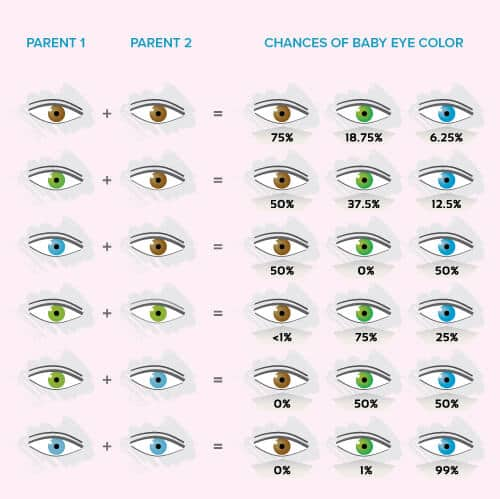 Baby Eye Color Calculator, Chart And Predictor | Momjunction
