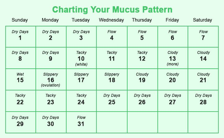 menstrual cycle time table