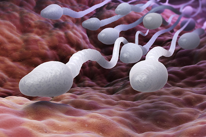 Why Are Scientists Studying Sperm To Find the Key To Male Fertility