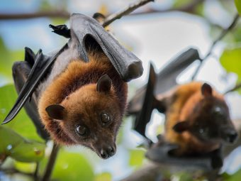All You Need To Know About Nipah Virus | Health Concerns, Health Checks, Health Journals