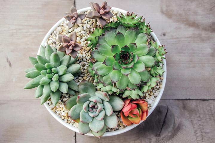 Succulent Plants Inexpensive Baby Shower Prizes for Games