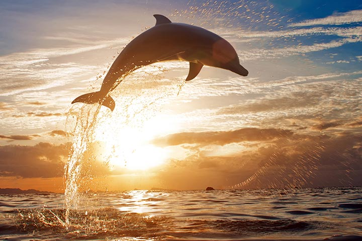 51 Interesting Facts About Dolphins