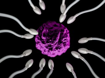 Where Does Fertilization Occur? 5 Things You Might Not Know