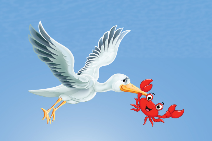 Crane, lobster story