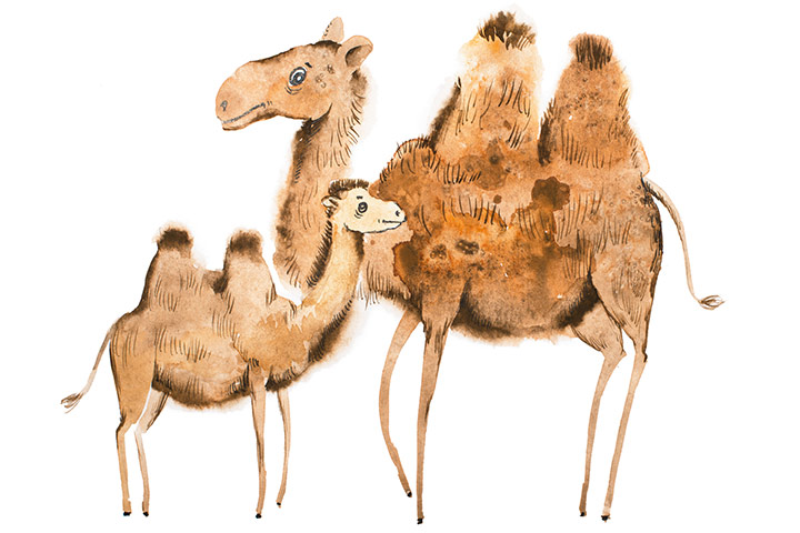 The camel and its baby